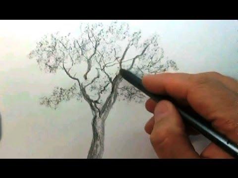 как рисовать дерево карандашом: