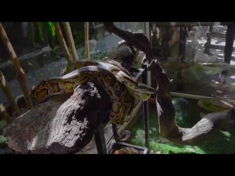 Scary Snake Hissing Loudly and Striking FAST