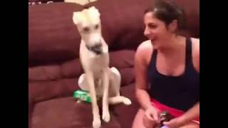 Top 200 of Animals VERY FUNNY ANIMALS