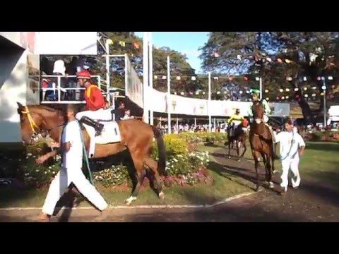 """Kingfisher Ultra Indian Derby-2016 :- Parade of horses in the paddock"