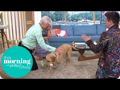 Guide Dog Clover Hilariously Refuses To Pose For A Photo And Drags Phillip Off Set! | This Morning