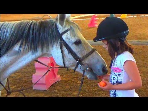 Кормить Лошадь  Лакомство для лошадей