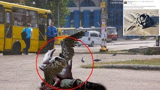 7 Mysterious Creatures Caught On Camera & Spotted In Real Life #2