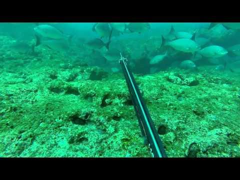 Spearfishing Australia - Reels n rollers