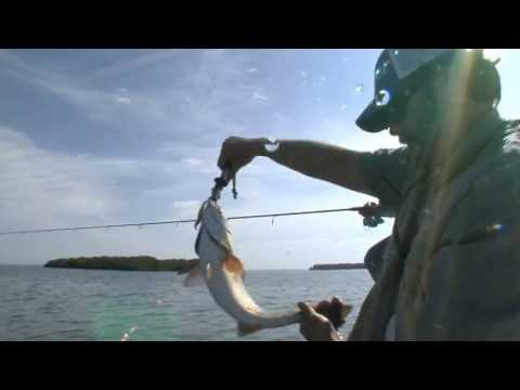 REEL ANIMALS FISHING • Redfish (April / Sarasota Bay)