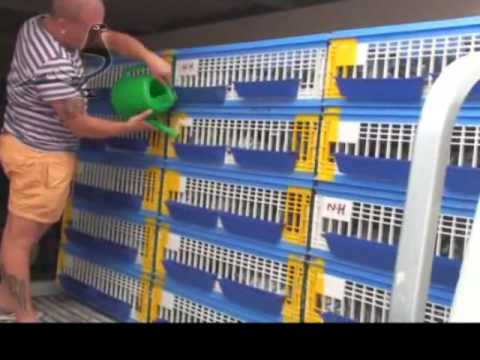 Maritime-1 Race Derby Internacional Arona-TENERIFE Pigeon Race Part 1/3