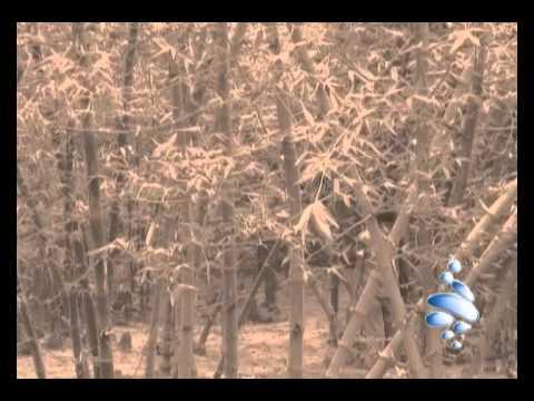 Vibe - Bidhatari Ronge Aka
