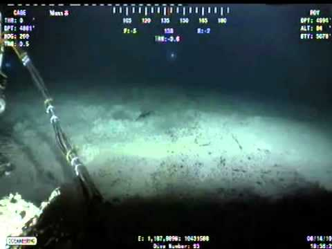 Bp Oil Spill Cam: Skippy video