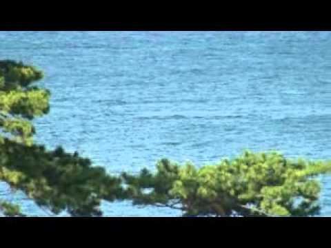 金目鯛でお馴染みの稲取温泉にクジラ出現!!