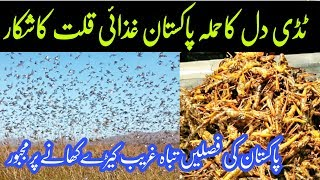 Sindh Locust| Locust invasion in Sindh and large-scale|Tedi dil| AWAAMI TV