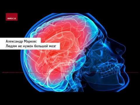 Александр Марков: Людям не нужен большой мозг