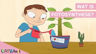 Wat is fotosynthese?