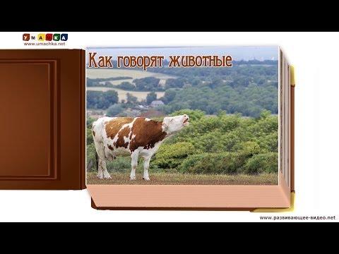 Как говорят животные (звуки животных) - развивающее видео для детей (1)