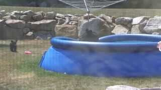black bear and cubs in pool