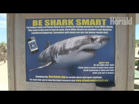 Great whites return to Cape Cod