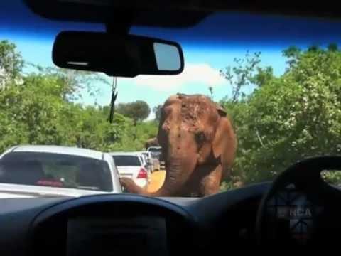 eNCA | Elephants Give Tourists a Holiday to Remember