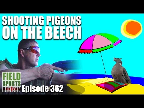 Fieldsports Britain - Shooting Pigeons on the Beech
