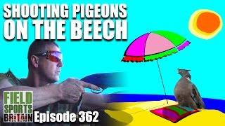 Fieldsports Britain - Shooting Pigeons on the Beech