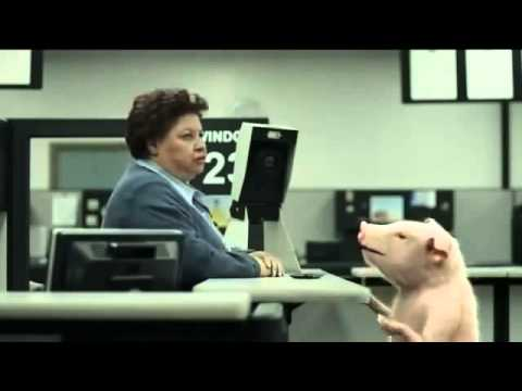 Geico Commercial - Dmv Pig's Identification Photo - Adsyo! video
