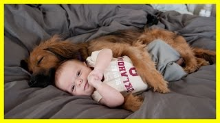 Dog Massage Little Baby Child Baby enjoying massage by his pet dog