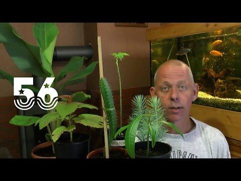 Die Sämlinge und wie geht es weiter mit den Exoten und anderen Pflanzen Teil 56