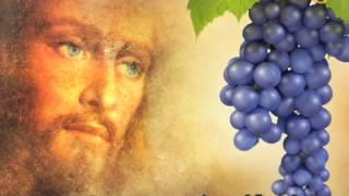 Evangelio de San Juan 15,1-8