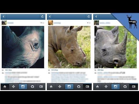How Instagram is Killing Endangered Rhinos