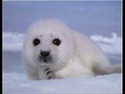 Donovan - Celia Of The Seals