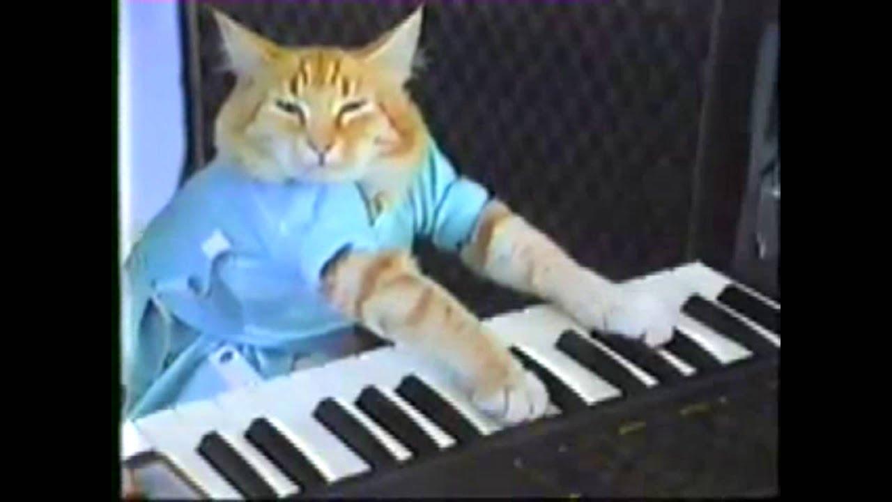 Keyboard cat minecraft skin : X real estate development xred query