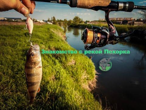как ловить на реке пехорка