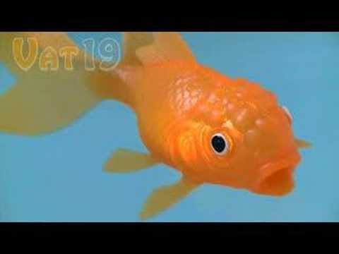 Koi Toy Light-up Bathtub Fish Toy