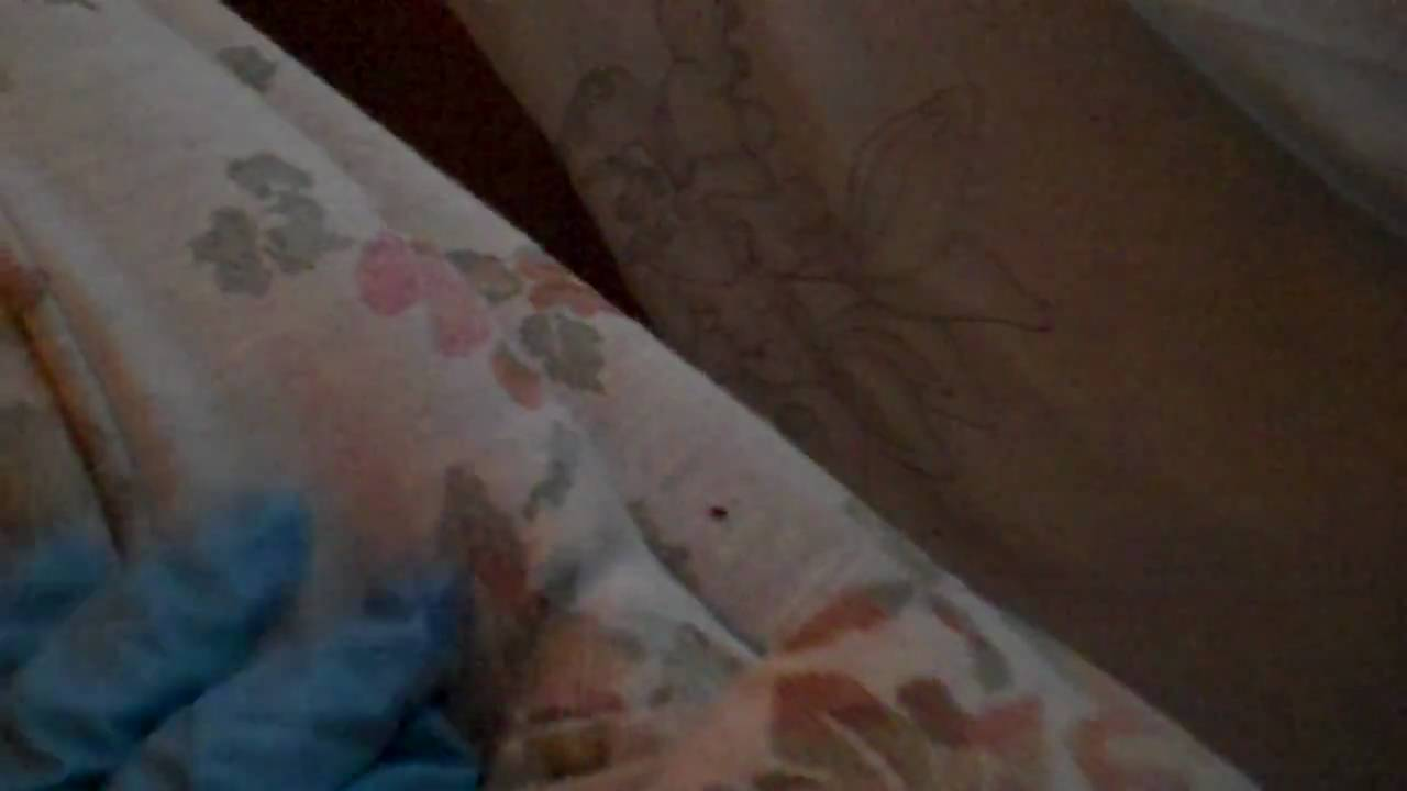 Bed Bugs On Couch Youtube