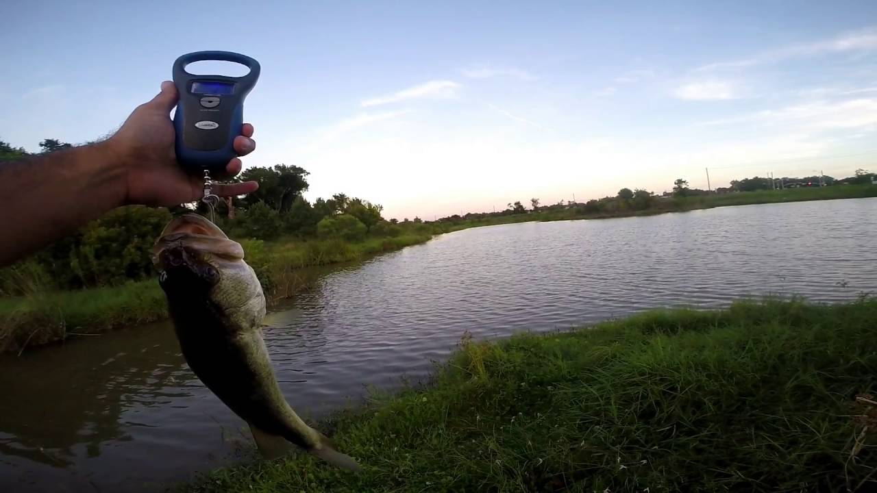 Bass fishing new pond crank bait fishing box Best lures for pond fishing