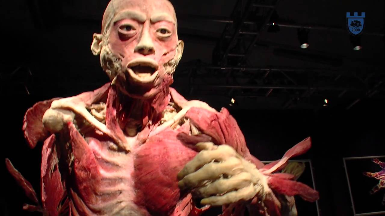 The Exhibition is an exhibition showcasing human bodies that have been preserved through a process called plastination and dissected to display bodily systems. It .