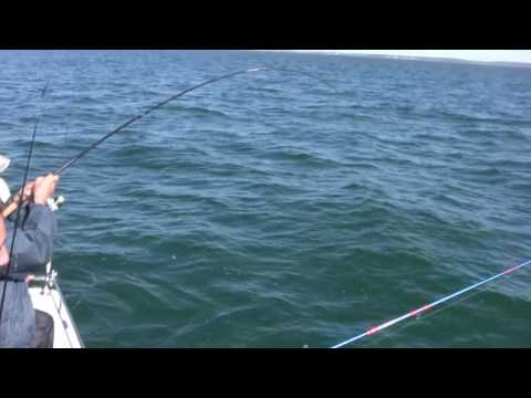 How to Catch Bluefish, Bigger Bluefish, and More Bluefish - Saltwater Bluefish Fishing