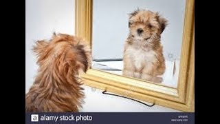 🐶 🐱Cute and Funny Dog and Cat Vs Mirror Videos (2018)🐶 🐱