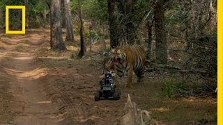 Robot vs. Tiger | Nat Geo Live