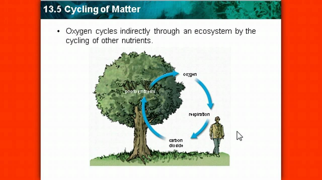 cycles of matter Looking for cycle of matter on earth find out information about cycle of matter  on earth recurrent processes of the transformation and migration of matter in.