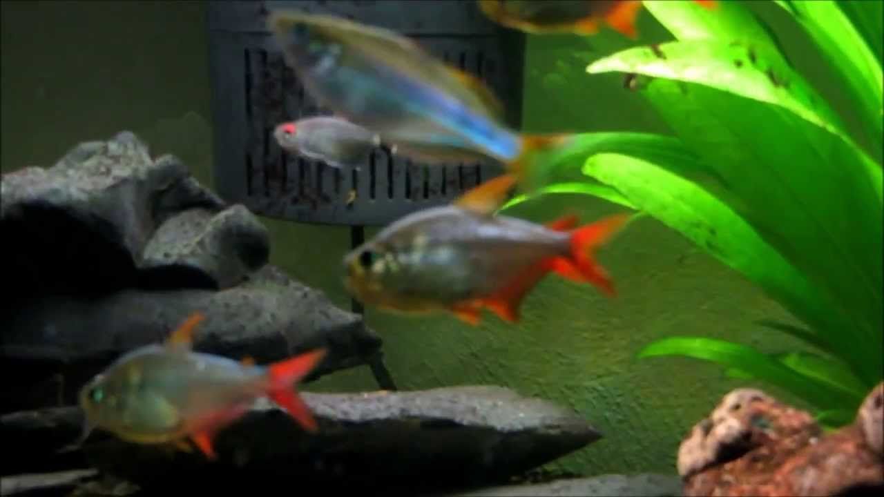 Planted community fish tank youtube for Community fish tank