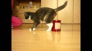 Adiestrando a un gato