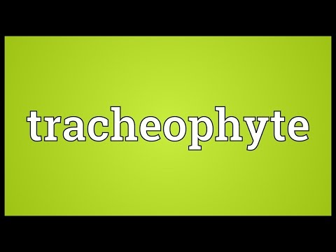 Header of tracheophyte