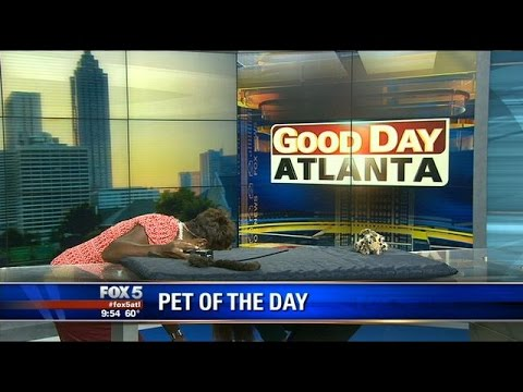 LOL: Excited kitten takes bouncing leap during Good Day Atlanta