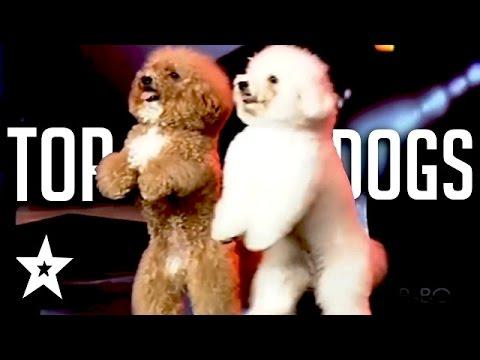 Las mejores audiciones de perritos