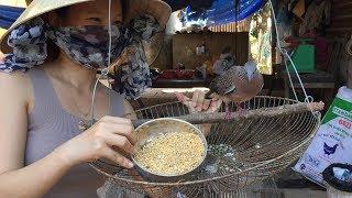 ➤  Mẹo thuần cu gáy / Thức ăn cho chim cu gáy nhanh nổi,Cách làm khoáng cho cu gáy CĂNG LỬA