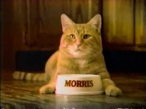 Cat Food Commercial