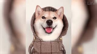 Funniest  Cats and  Dogs  -  Awesome Funny Animals Life - Funny Animal Compilation 2019