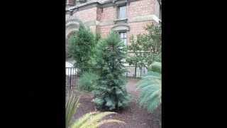 Jardin en Uruguay   Categoría: JARDINES BOTANICOS