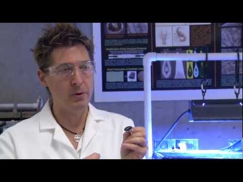 Using Snail Teeth to Improve Solar Cells and Batteries - UCR's David Kisailus