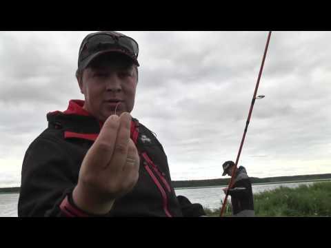 рыбалка в сургуте цена