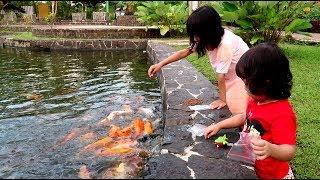 Kasih Makan Ikan | Ikannya Banyak Banget & Besar-Besar